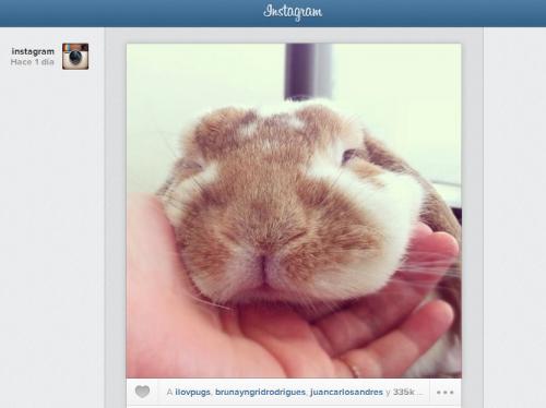Instagram lanzó su nuevo feed accesible desde el escritorio