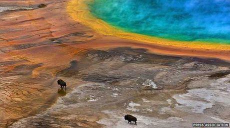 Turista es multado por haber estrellado un dron en Yellowstone