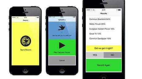 Conoce dos aplicaciones para reconocer el canto de los pájaros